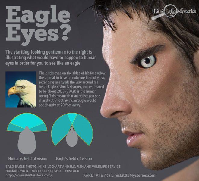 download Eagle Vision workshop manual