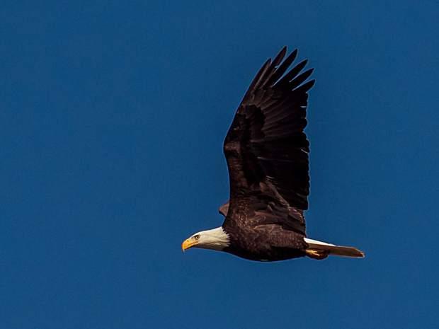 download Eagle Vista able workshop manual